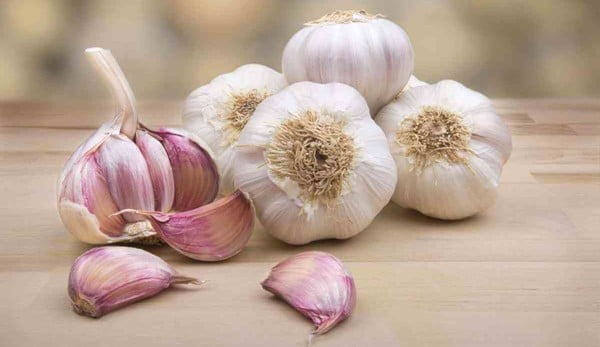 Ail en provenance de Lybie/garlic in large quantities from lybia