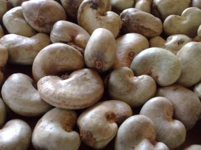 10.000 tonnes de noix de cajou brute a bon prix