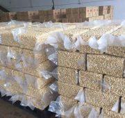 3000 Tonne de noix d'acajou W320 en vente